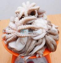 giá bạch tuộc 24hseafood