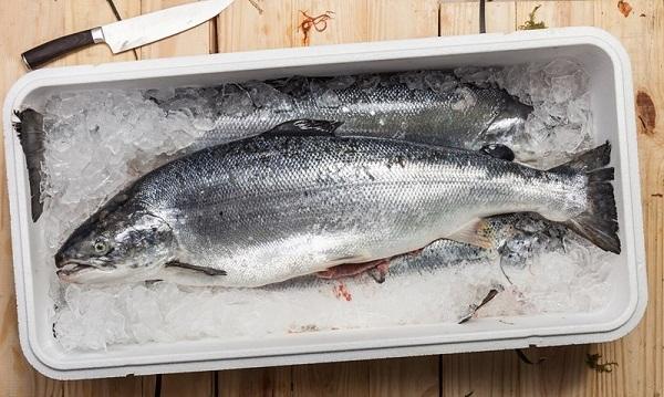 bảo quản cá