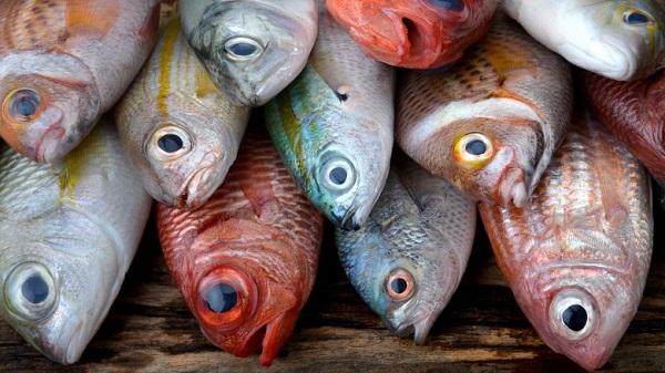 7 loại hải sản bạn nên ăn
