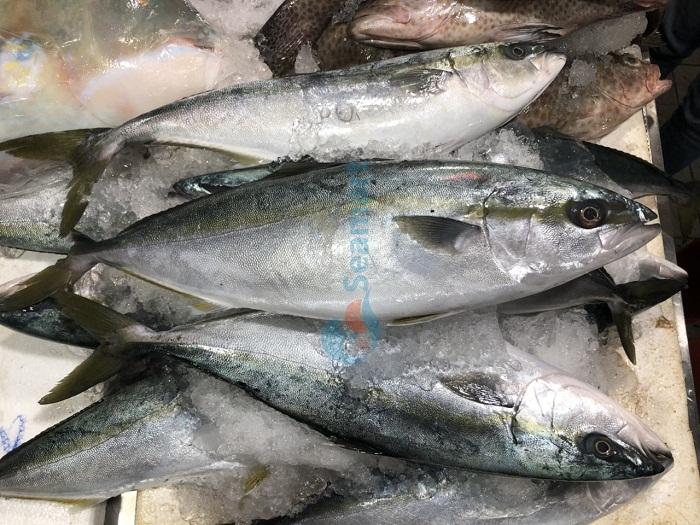 bán cá biển tươi tphcm
