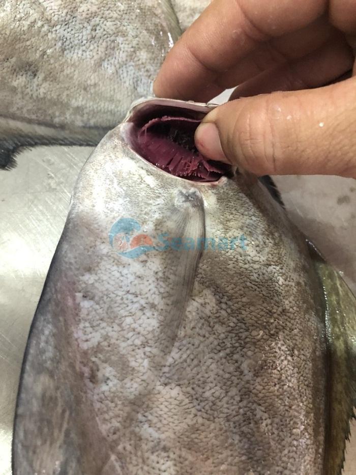 chọn cá biển tươi ngon