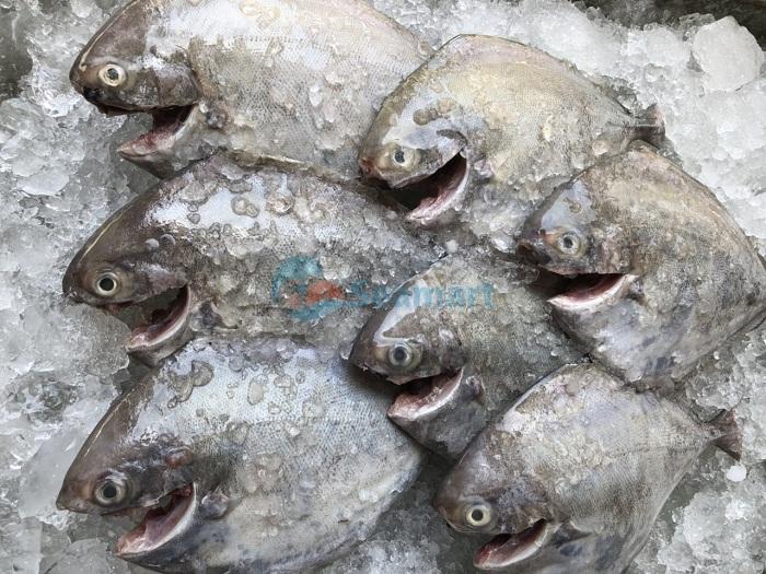 cung cấp cá biển tươi
