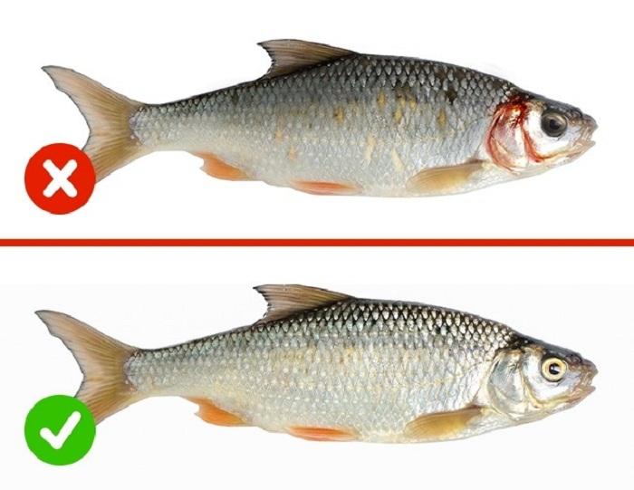 nguyên tắc chọn cá biển tươi