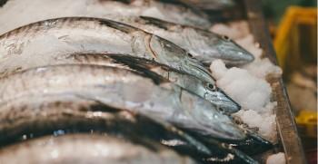 giá cá biển hôm nay